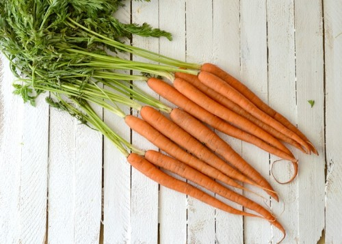 farm-fresh-carrots-500x357
